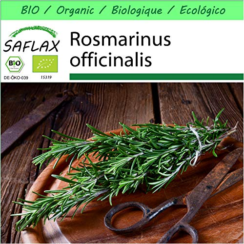 SAFLAX - - Ecológico - Romero - 40 semillas - Rosmarinus officinalis