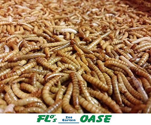 Mehlwürmer LEBEND 500 Gramm Futterinsekten Reptilienfutter Futtertiere Igelfutter Vogelfutter