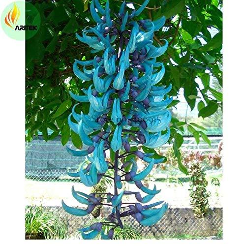 Bellfarm Bonsai Raras de la herencia Mucuna Azul Negro Rojo Jade Vine muy hermosas flores perennes de alta germinación -5pcs / pack: E3521 azul