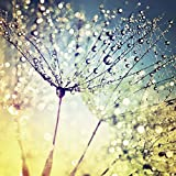 Artland Qualitätsbilder I Glasbild Pusteblume Glasbilder Sonnenaufgang Tau auf Blumen 20 x 20 cm Modernes Wandbild Wassertropfen Botanik Bunt A5XG