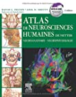 Atlas de neurosciences humaines de Netter - Neuroanatomie-Neurophysiologie