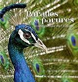 Parades et parures : quand l'oiseau veut séduire