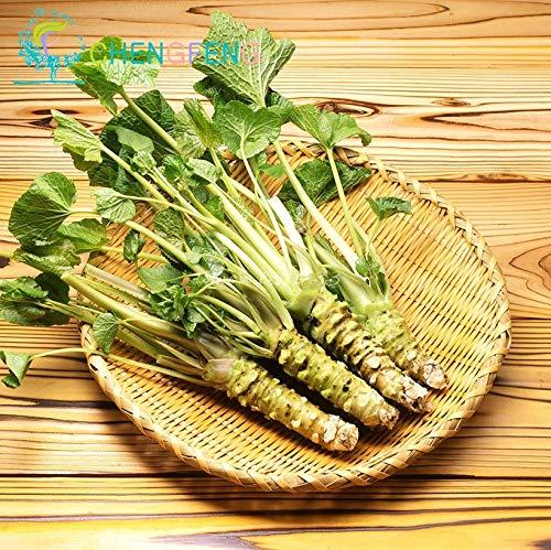 Shopmeeko 50 teile/los Wasabi pflanzen Japanische meerrettich bonsai Gemüse Diy Pflanze Bonsai für Hausgarten Sementes seltene und frische pflanzen po