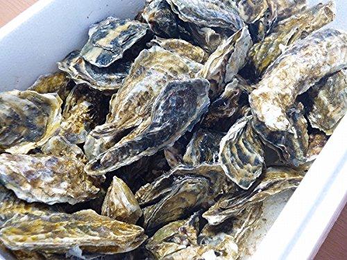 北海道・生牡蠣(かき)(殻付き)牡蠣・厚岸西岸 仙鳳趾【牡蛎】訳あり4キロ【生食用】