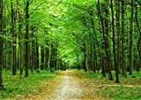 StickersWall Woodland Tree Pathway Forest Nature Landscape Scenery Wall Mural Photo Wallpaper Picture Self Adhesive 1014 (228cm(W) x 161cm(H))