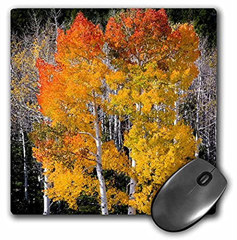 Danita Delimont - Scott T. Smith - Trees - Utah, USA, Aspen trees in autumn. Fish Lake Basin. Fishlake NF. - MousePad (mp_191931_1)