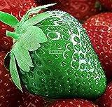 AIMADO 100 Stücke/beutel Erdbeere-samen Erdbeere - Strawberry Gewächshaus Vergossen Bio Gemüse & Obst Samen 6 Farben