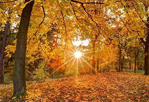 MMPTn 5x3ft Herbst Goldenen Wald Hintergrund Sommer Camp Party Events Dekoration Tapete Färbung Herbstsaison Sonnig Gefallenen Trockenen Baum Blätter Fotostudio Requisiten