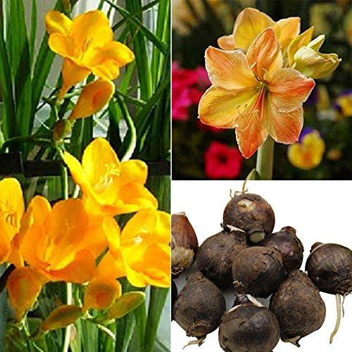 topmountain semi di fiori di bulbi di aglio,3pcs semi di fiore dell'albero carnivoro per la piantagione di giardino di casa,facile da coltivare