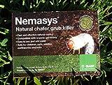 Nemasys chafer grub killer 100sqm Spring Application