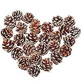QULiTAN 27Pezzi di Natale pigna Ornamento con String Snow pigne Naturale Ciondolo per bigliettino Crafts Festa di Nozze, Decorazione per Albero di Natale (1.4–5,8cm)