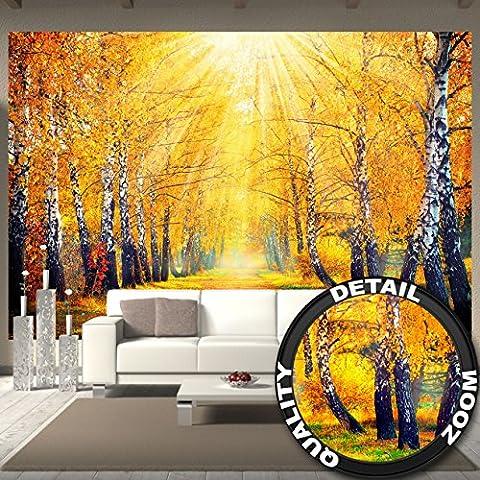 Photo papier peint doré de l'automne décoration de peinture murale bouleau forêt nature paysage ruelle d'arbre automne parc de forêt et de soleil saisonnier | mur deco chez GREAT ART (336 x 238 cm)