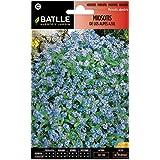 Semillas de Flores - Miosotis de los Alpes azul - Batlle