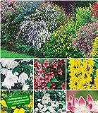 BALDUR-Garten Hecken-Kollektion, 11 Pflanzen Bartblume, Großblumiges Johanniskraut, Deutzie, Brautspiere und Weigelie