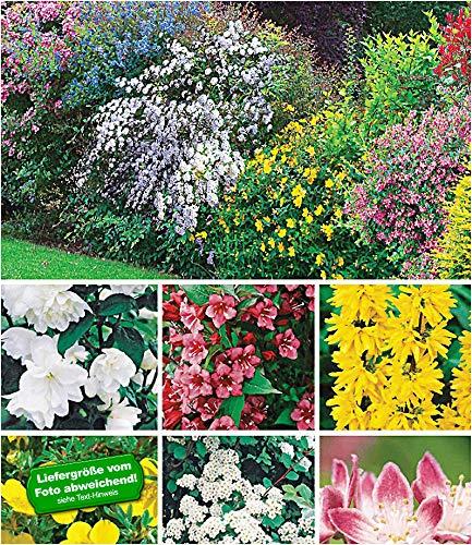 BALDUR-Garten Hecken-Kollektion, 11 Pflanzen Bartblume, Großblumiges Johanniskraut, Deutzie,...