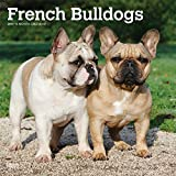 French Bulldogs 2019 Calendar