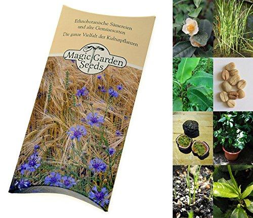 Saatgut Set: 'Tropische Nutzpflanzen': Kaffee, Banane, Maracuja, Reis, Tee - 5 weltberühmte exotische Pflanzen als Samen in schöner Geschenk-Verpackung Exotischer Grüner Tee