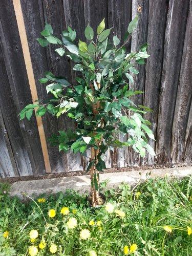 Ficus Promo ca. 120cm und 504 Blätter Kunstbaum