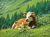 Artland Qualitätsbilder I Wandtattoo Wandsticker Wandaufkleber 40 x 30 cm Tiere Haustiere Kuh Foto Natur C4AF Kuh auf der Schweizer ALM