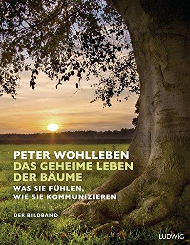 Buchseite und Rezensionen zu 'Das geheime Leben der Bäume: Was sie fühlen, wie sie kommunizieren. Der Bildband. Mit dem vollständigen Text der Originalausgabe' von Peter Wohlleben
