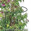 Busch- und Strauchstütze B. 40 x H. 35 cm x T. 14 cm von bellissa bei Du und dein Garten