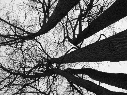 Tomasucci Winter tree quadro con telaio stampa su tela