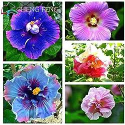 Green Seeds Co. 100 stücke Hibiscus bonsai 24 arten Mix Farbe SchÃne Rosa-sinensis Blume bonsai Mehrjährige Blume Baum Topf Garten Plan: gelb