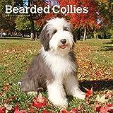 Bearded Collies 2019 - 18-Monatskalender mit freier DogDays-App (Wall-Kalender)