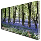 Blue Bells Forest Landscape scenery box print canvas art picture LARGE 656