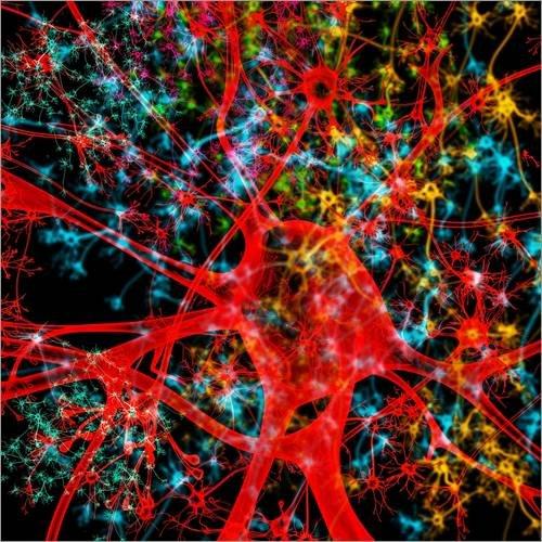 Posterlounge Leinwandbild 30 x 30 cm: Neuron, Illustration von MEHAU KULYK/Science Photo Library - fertiges Wandbild, Bild auf Keilrahmen, Fertigbild auf Echter Leinwand, Leinwanddruck