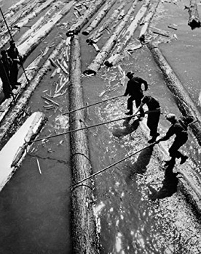 Lumberjack Log (High angle view of three lumberjacks pulling logs out from water Poster Drucken (60,96 x 91,44 cm))