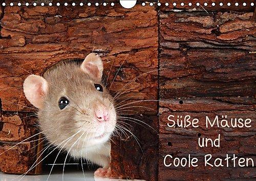 susse-mause-und-coole-ratten-wandkalender-2017-din-a4-quer-mause-und-ratten-fotos-die-man-nicht-jede