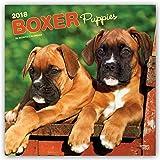 Boxer Puppies - Boxer Welpen 2018 - 18-Monatskalender mit freier DogDays-App: Original BrownTrout-Kalender [Mehrsprachig] [Kalender] (Wall-Kalender)