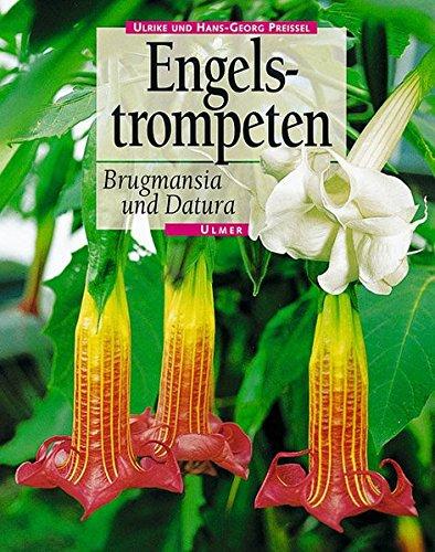 Engelstrompeten. Brugmansia und Datura