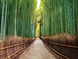 #9: JP London PMURLT2405 Prepasted Removable Wall Mural Bamboo Forest Path Zen Trees, 4' x 3'