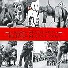 Blind Man's Zoo
