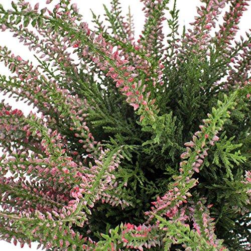 artplants – Künstlicher Erika Busch Elani im Kunststofftopf, rosa, 35 cm,Ø 35 cm – Deko Heidekraut/Kunstblumen Heide
