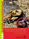 Köhler- und Waldschildkröte (Chelonoidis carbonaria und Chelonoidis denticulata)