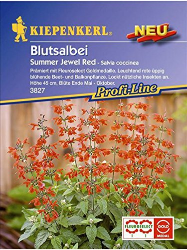 Blutsalbei Salvia coccinea Summer Jewel Red