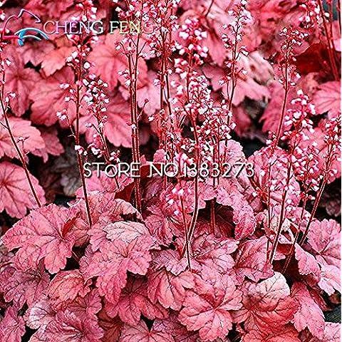 Tiempo límite !!! Semillas nueva Arrial del arco iris Heuchera frescas interesante de semillas de pasto flora Semillas abeja regalo