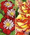 BALDUR-Garten Set Klematis & Rose: Clematis 'Avant Garde TM'& Kletterrose 'Parure d'or®', 2 Pflanzen von Baldur-Garten - Du und dein Garten