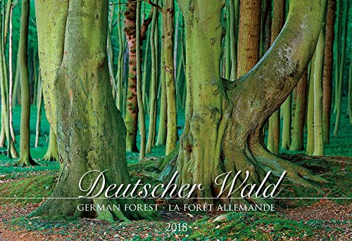 Wall Calendar Forests 2018 49.5 x 34 cm
