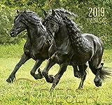 Friesen 2019: Friesen Pferde
