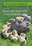 Brut und Aufzucht unserer Hühner (Expertenwissen Geflügelzucht)