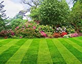 Creative Farmer Turf Lawn Grass Seeds for Large Area (Pack of 2000 Seeds)