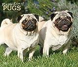 Pugs – For the Love of - Möpse 2019 - 18-Monatskalender mit freier DogDays-App (Deluxe-Kalender)