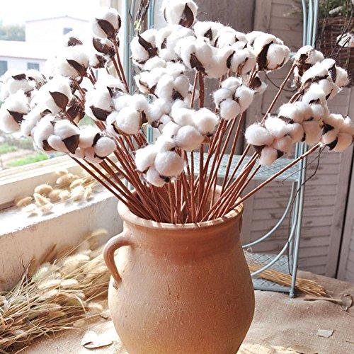 Artificiale cotone fiore singolo testa fiori secchi in cotone con breve ramo decorativo fiore diy crafts decor for home party wedding 10pcs/set