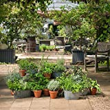 Kräuter-Pflanzen - Großes Kräuter-Starter-Set - Enthält 26 Pflanzen zum günstigen Setpreis
