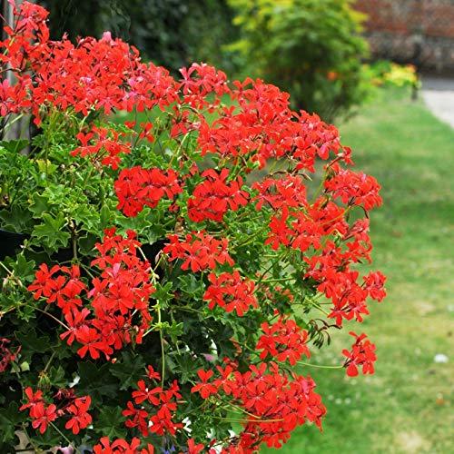 OBI Lila Blüten