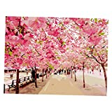 Phenovo Unframed 16 x 20 Inch Paint By Numbers Kit with Brushes and Paints Home Living Room Wall Decorative Crafts - sakura, 40x50cm